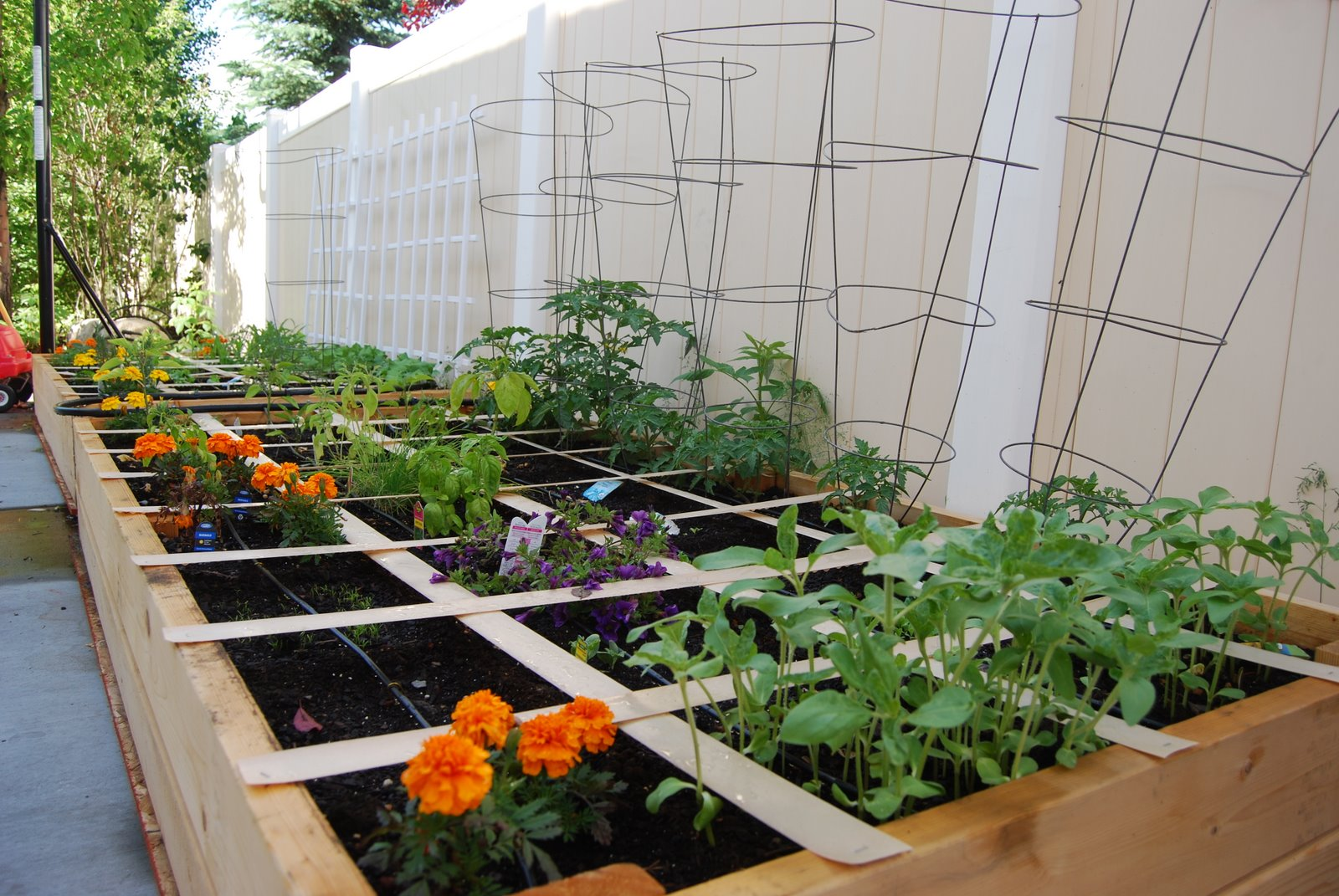 Gardening My Blog